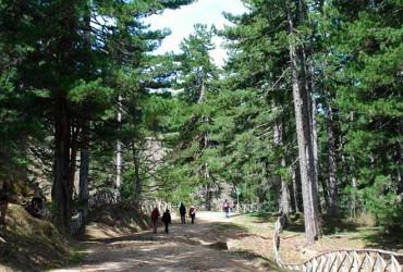 trekking-sila-macchialonga